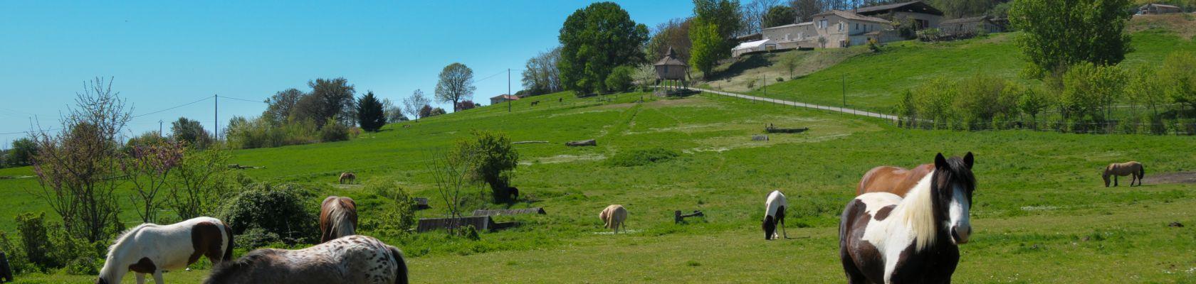 Gîte d'étape et de Séjour du Domaine équestre de Lauzerte